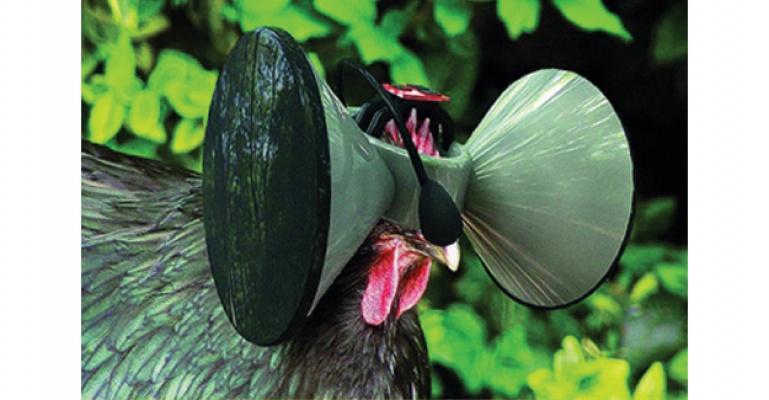 Sanal gözlük: Hemde Tavuklar İçin