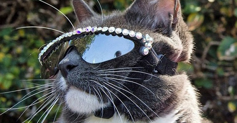 Bu Kedi Güneş Gözlüğü Takıyor Ama Neden?