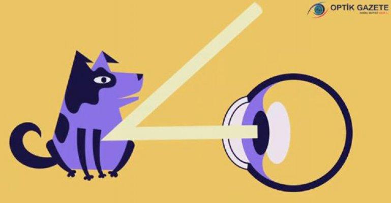 Gözlerimiz Nasıl Çalışıyor?