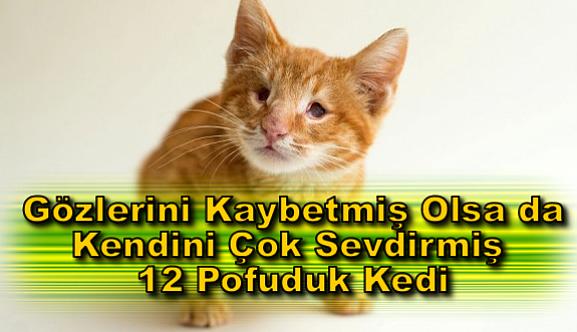 Aşkın Gözü Kördür! Gözlerini Kaybetmiş Olsa da Kendini Çok Sevdirmiş 12 Pofuduk Kedi