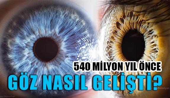 İnsan Gözünün Gelişimi Nasıl Oluştu?