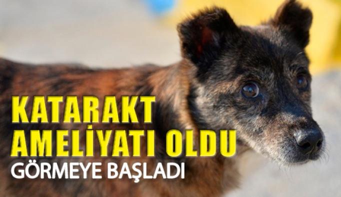 Mardin'de Ayaz Köpeğe Katarakt Ameliyatı Yapıldı