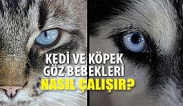 Kedi ve Köpek Göz Bebekleri Nasıl Çalışır?